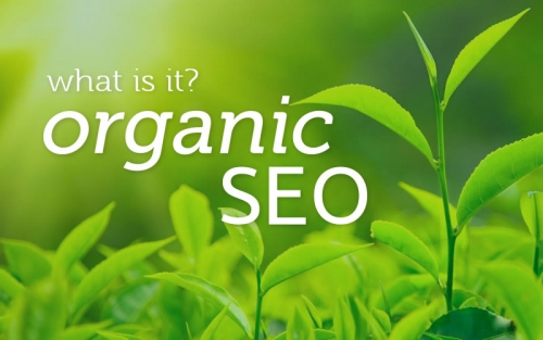 SEO growth with Wildeye